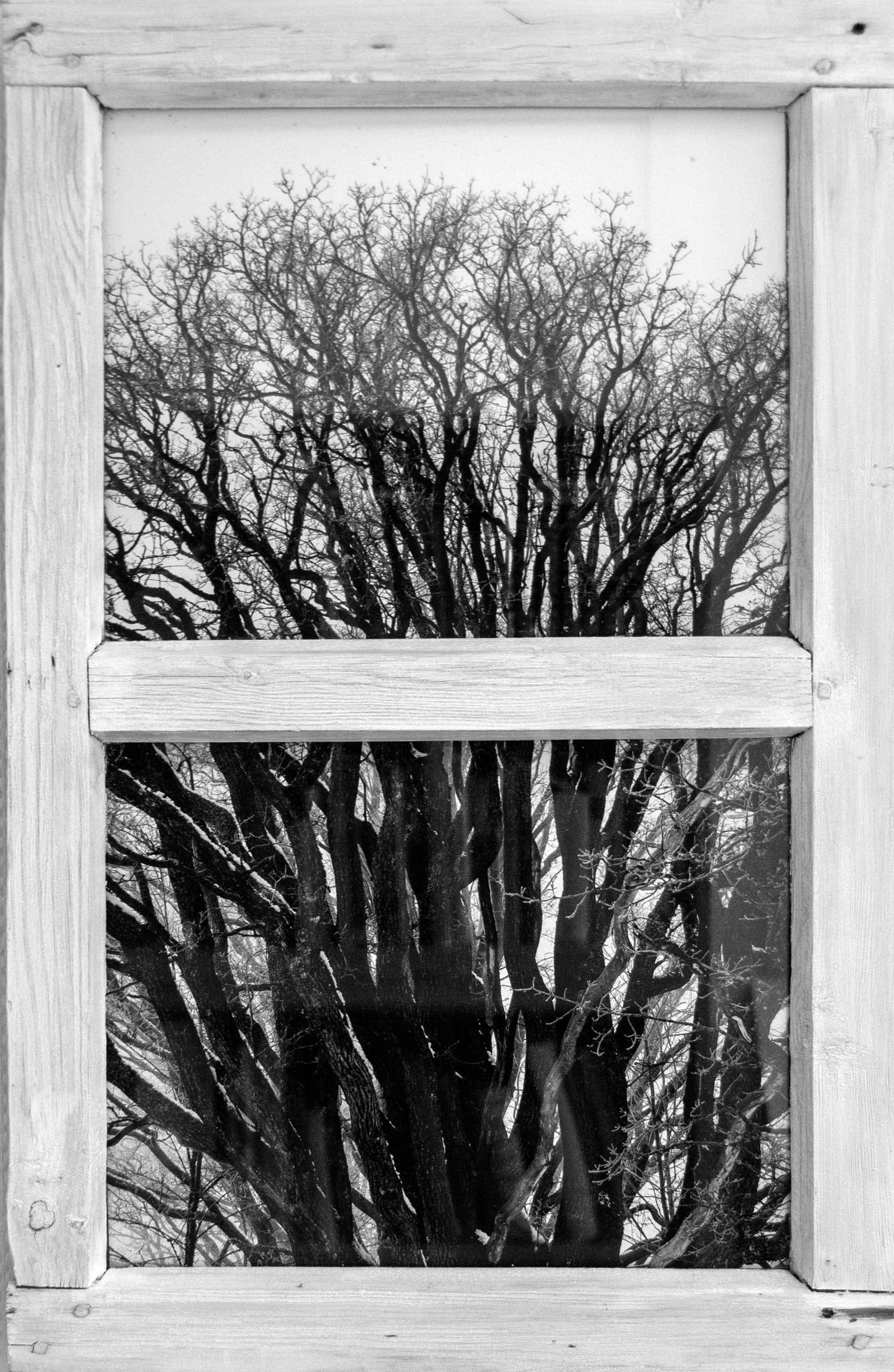 Maisemia Taideolohuoneessa 2019, Vanha puu ikkunassa 2